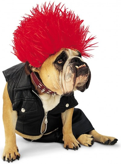 How To Find A Halloween Costume For Your Dog > Puppy Toob