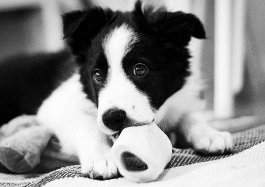 Puppy in Black and White > Puppy Toob