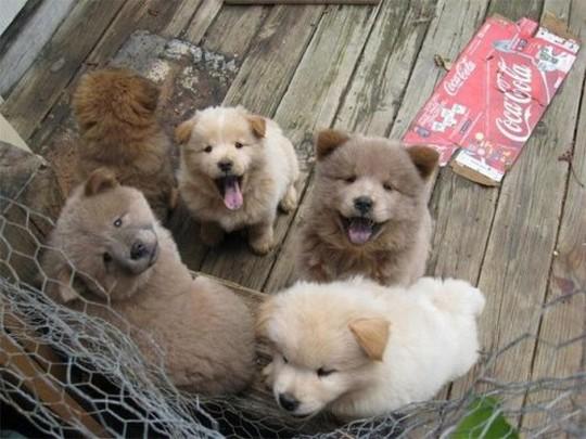 Adorable Furry Puppies Say Hi > Puppy Toob