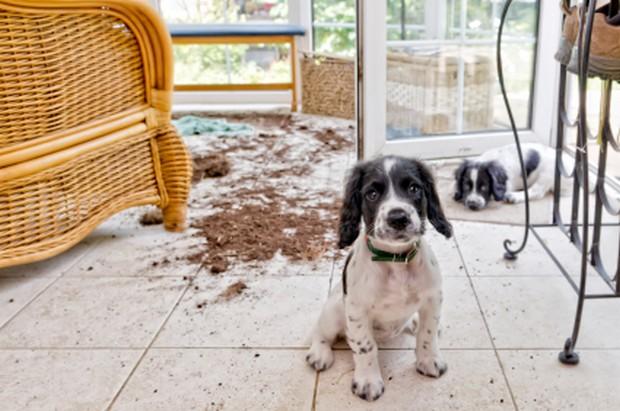 Can Cat Mess Up Carpet