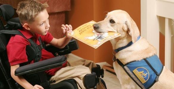 Dog Friendly Restaurants Hamilton