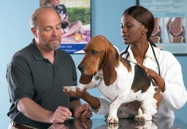 pet veterinary