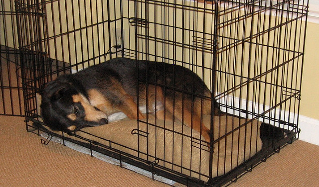 Dog Crate With Bathroom. Crate Training Blog Dog In Wire Crate Mara