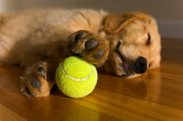 Videos Of Dogs Playing With Balls