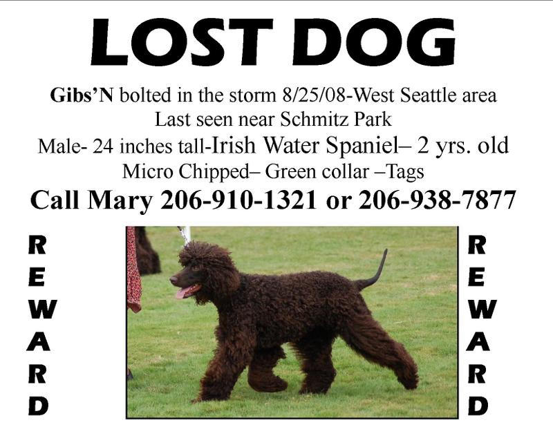 important tips on finding your lost dog