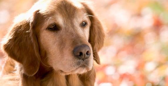 How Many Years Make A Senior Dog Year