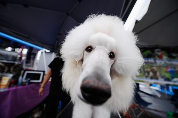Top Ten Fluffiest Dog Breeds Fluffy Little Dog Breeds