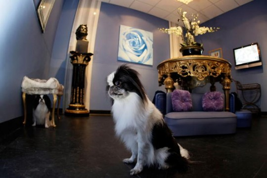 The 10 Most Expensive Dog Kennels In The World