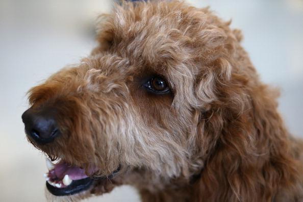 How Often Can I Give My Dog A Oatmeal Bath
