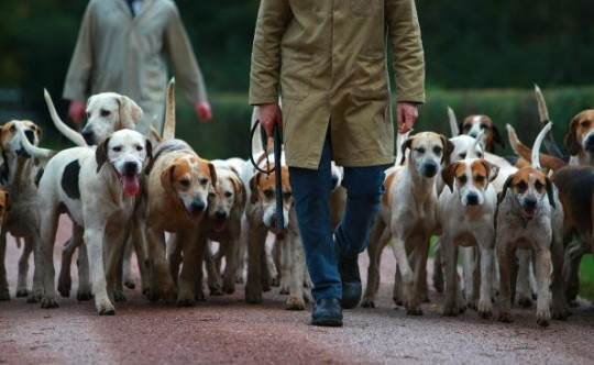 Hunting Dogs Whats In A Name Rose By Any Other Is Still Rosethere Are So Many Things That Can Be Said About Names And It Goes For Every Person