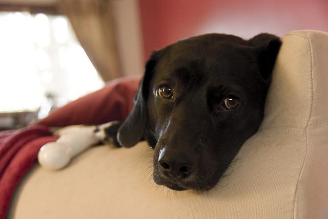 Good Smart Beagle Adorable Dog - 3576547907_5a186e39da_z  Best Photo Reference_925716  .jpg