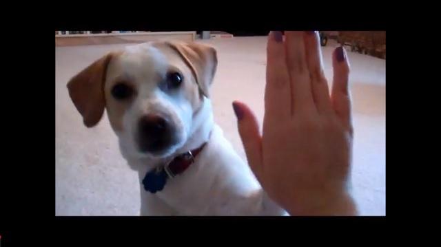 Good Smart Beagle Adorable Dog - smart-dog  Best Photo Reference_925716  .jpg