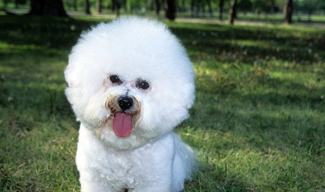 20 Of The Most Popular Small Dog Breeds