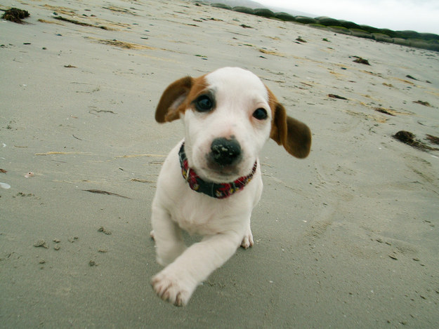 The 50 Cutest Puppy Pictures of All-Time