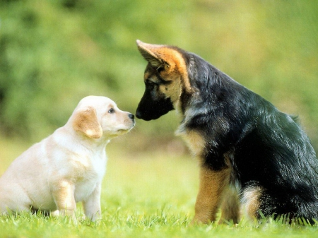 20 German Shepherd Puppies That Youll Want To Take Home Immediately
