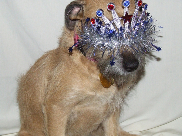 20 Hilarious Pictures Of Dogs Wearing Crowns