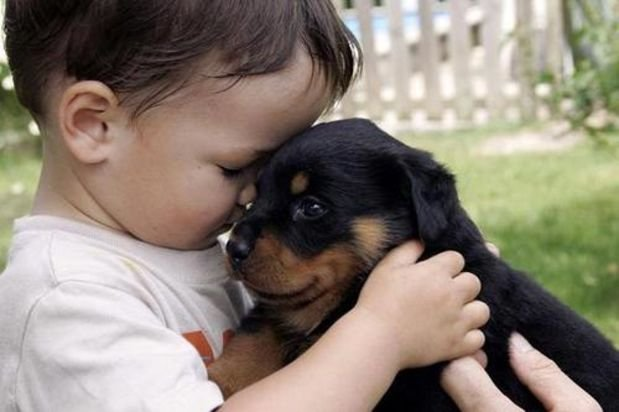 20 pictures showing how awesome puppies and babies are together