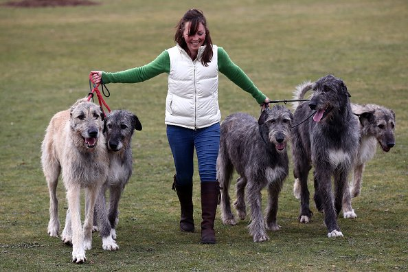 How Much Is Dog Walking Uk