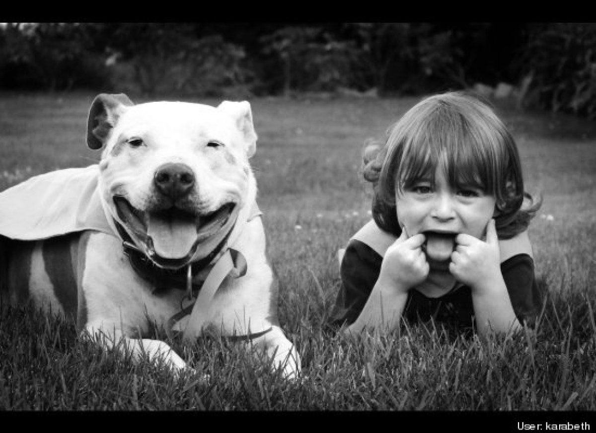 Amazing Things Happen When People Meet Pit Bulls For The
