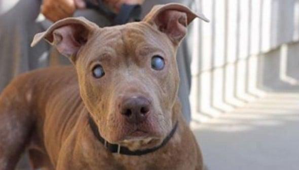Blind Dog Abandoned On Park Bench Gets Rescued