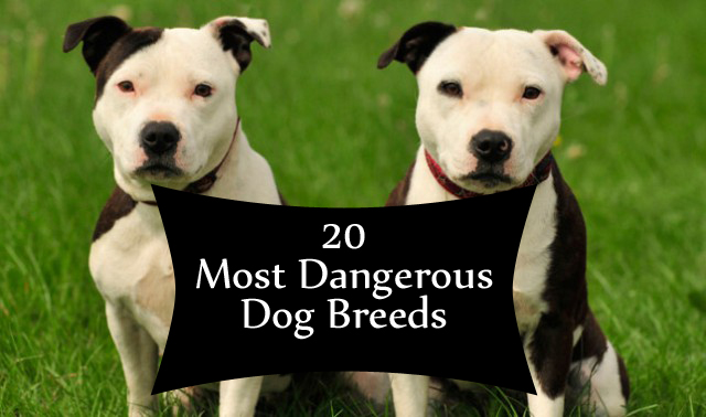 What Are The Most Vicious Dog Breeds