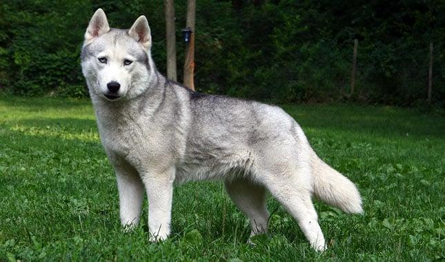 The 20 Worst Dog Breeds For Children