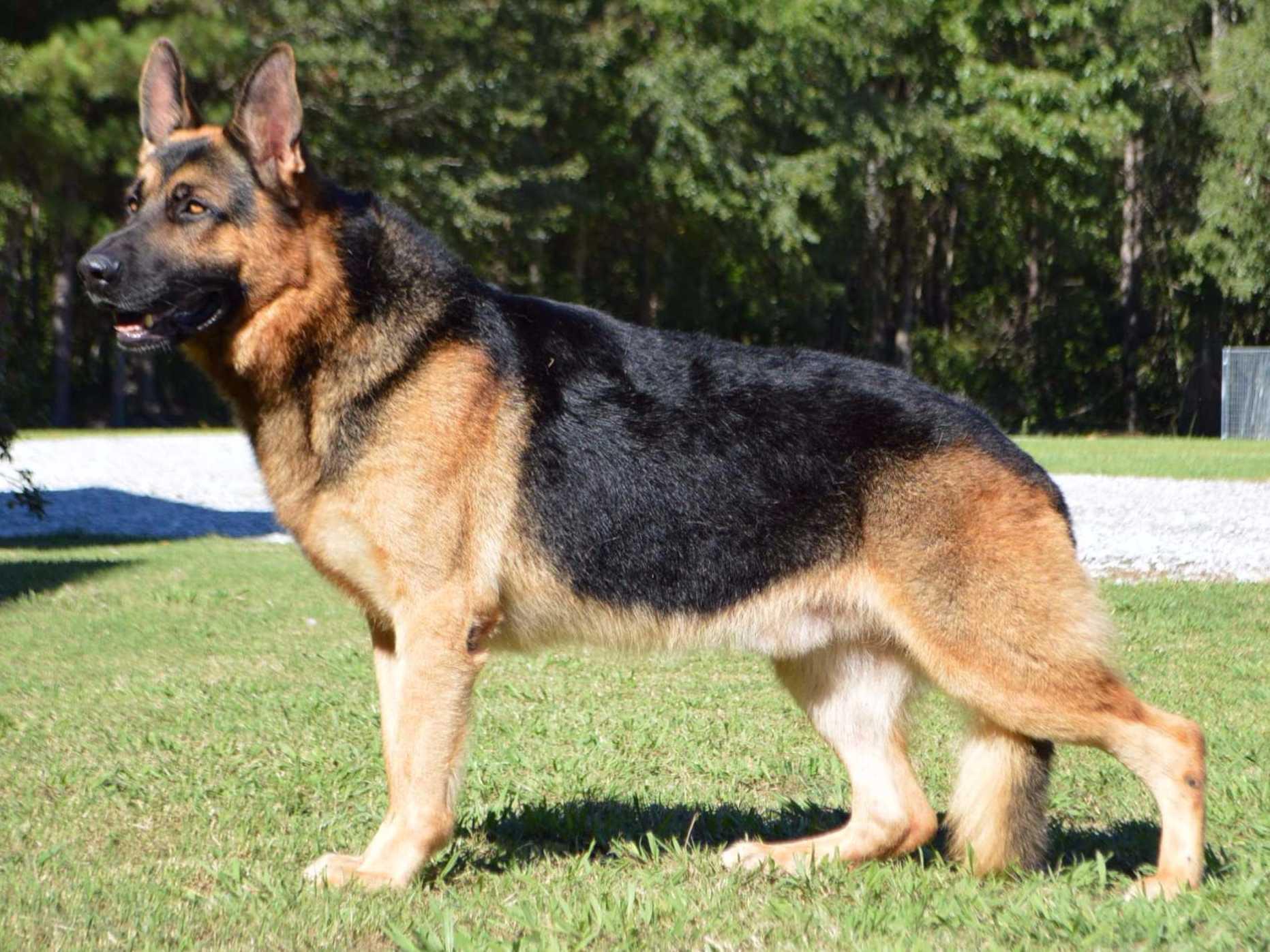 Good Dog Names For German Shepherds Female