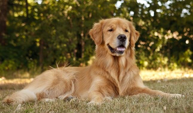 Draw 50 Dogs The StepbyStep Way to Draw Beagles German