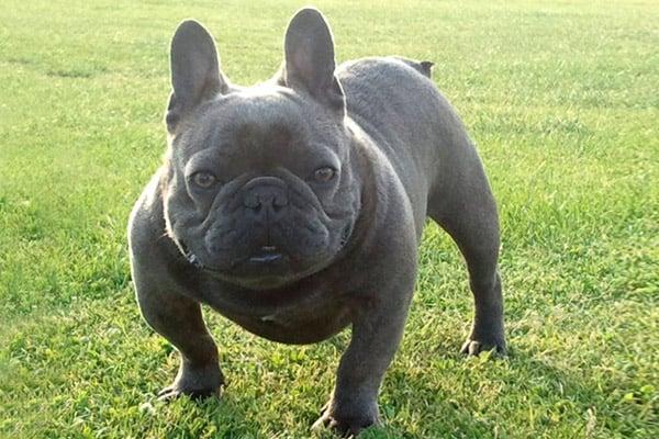 Cute But Tough Dog Breeds