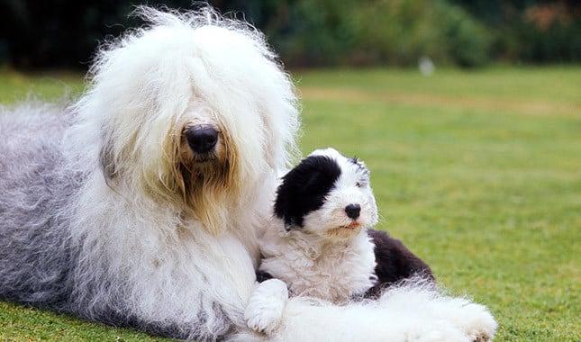 The 20 Most Por Dog Names Of 2017