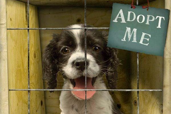 shelters dog pet states united shelter adoption animal dogs animals rescue adopt adopting rescues