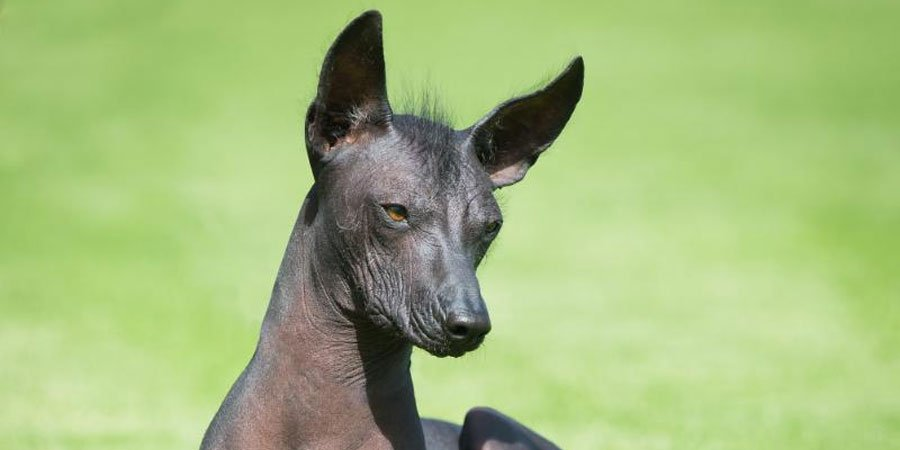 The 20 Most Bizarre Dog Breeds in the World