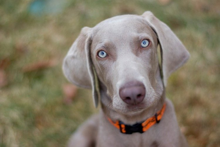 five facial expressions from your dog and what they mean