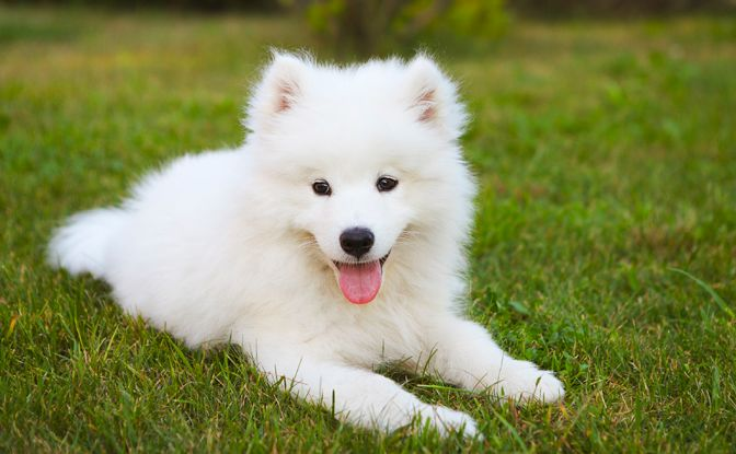 Cute And Fluffy Dog Breeds