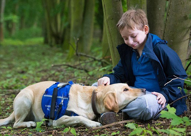 20 Dog Breeds Perfect For Autistic Children