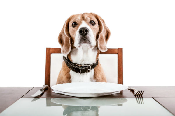 Why Can Dogs Not Eat Turkey