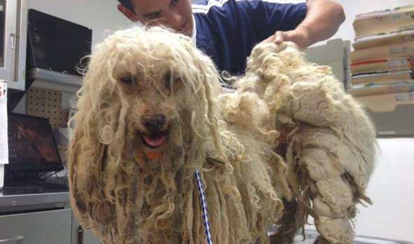 matted dog hair removal